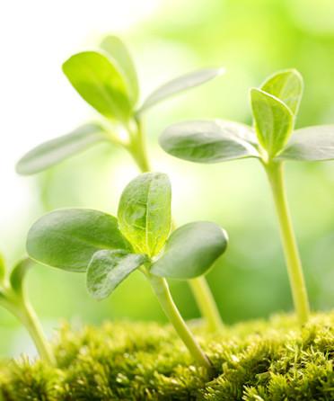 Stöbern Sie in unserem Sortiment an Pflanzenextrakten zum besten Preis ★ Ohne unnötige Zusatzstoffe ►100% made in Germany ✓ Jetzt kaufen!